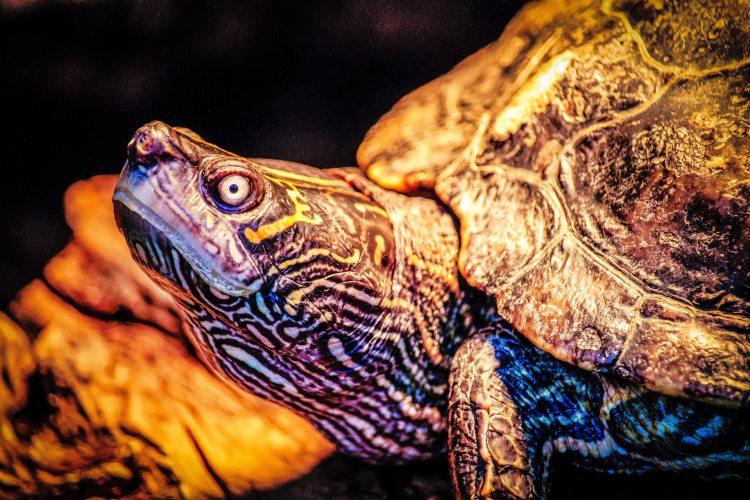 amphibian-animal-animal-photography-1136925.jpg